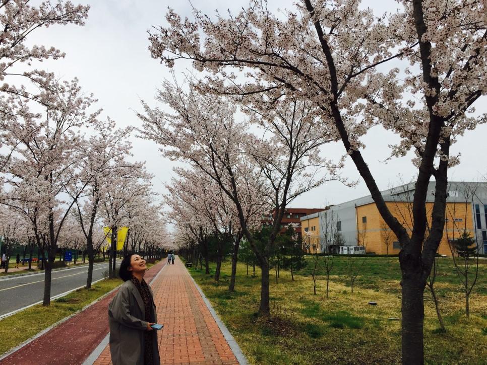 봄.jpg