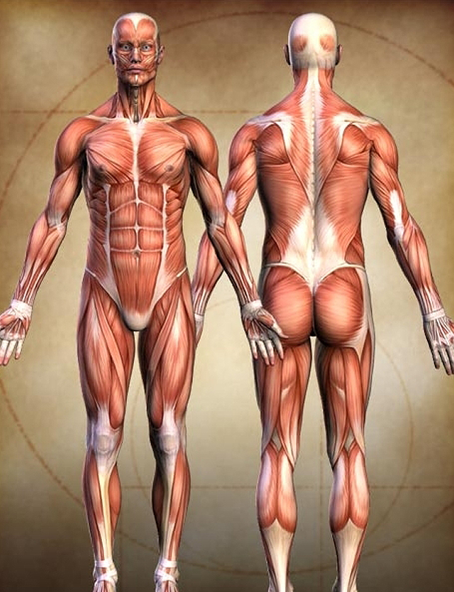 인체.jpg