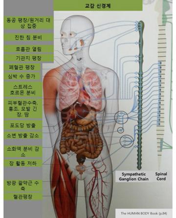 척추 도표 2.jpg