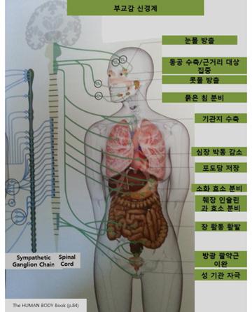 척추 도표 3.jpg