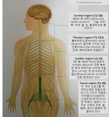 척추 도표1.jpg