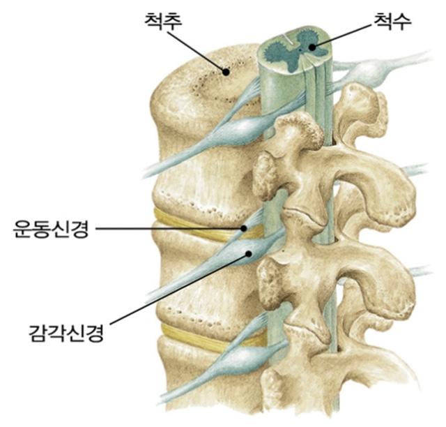 척추 4.jpg