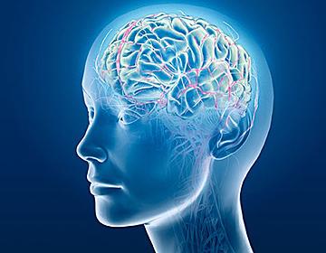 뇌 2.jpg
