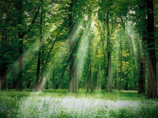 숲 4.jpg