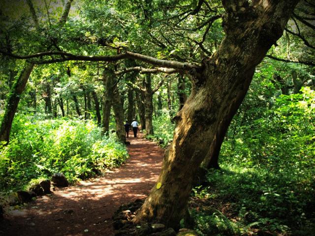 숲 1.jpg