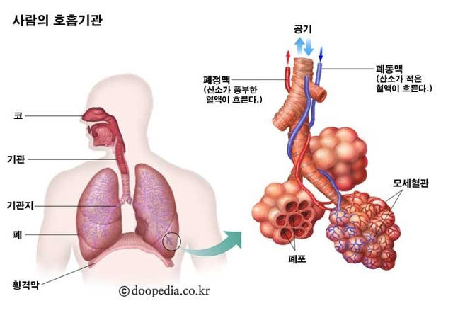 호흡 기관.jpg