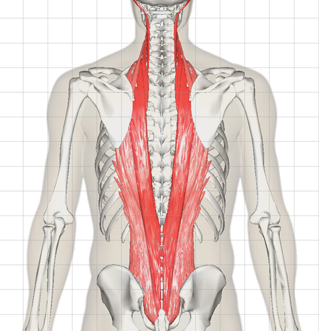 척추기립근 3.jpg