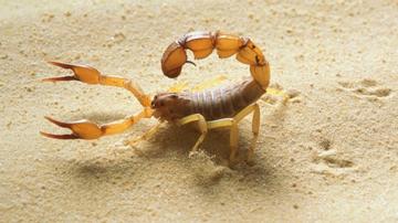사막 동물.jpg