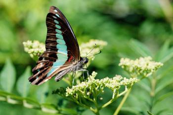 나비 꽃.jpg