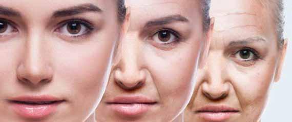 인간와 노화 2.jpg
