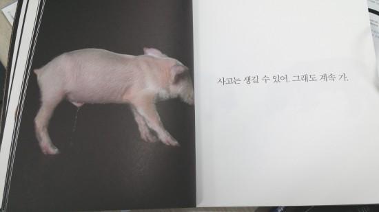 돼지.jpg