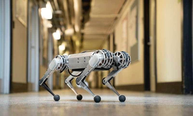 cheeta2.jpg