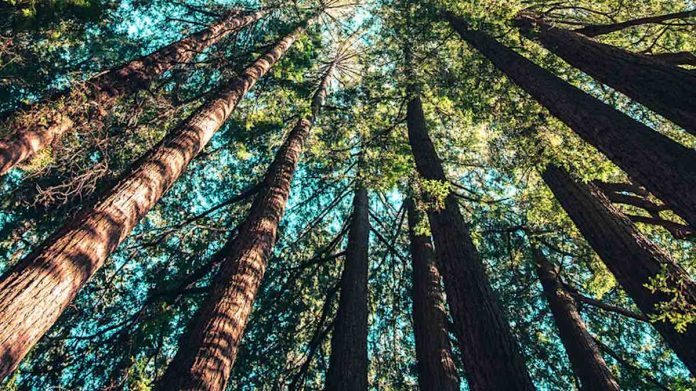 sound-trees-forest-nature-pubdomain-Casey-Horner-696x391.jpg