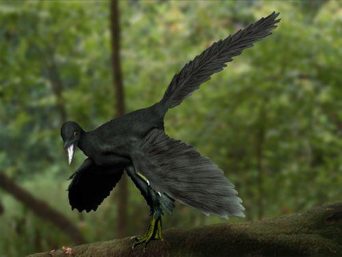 Archaeopteryx_NT.jpg
