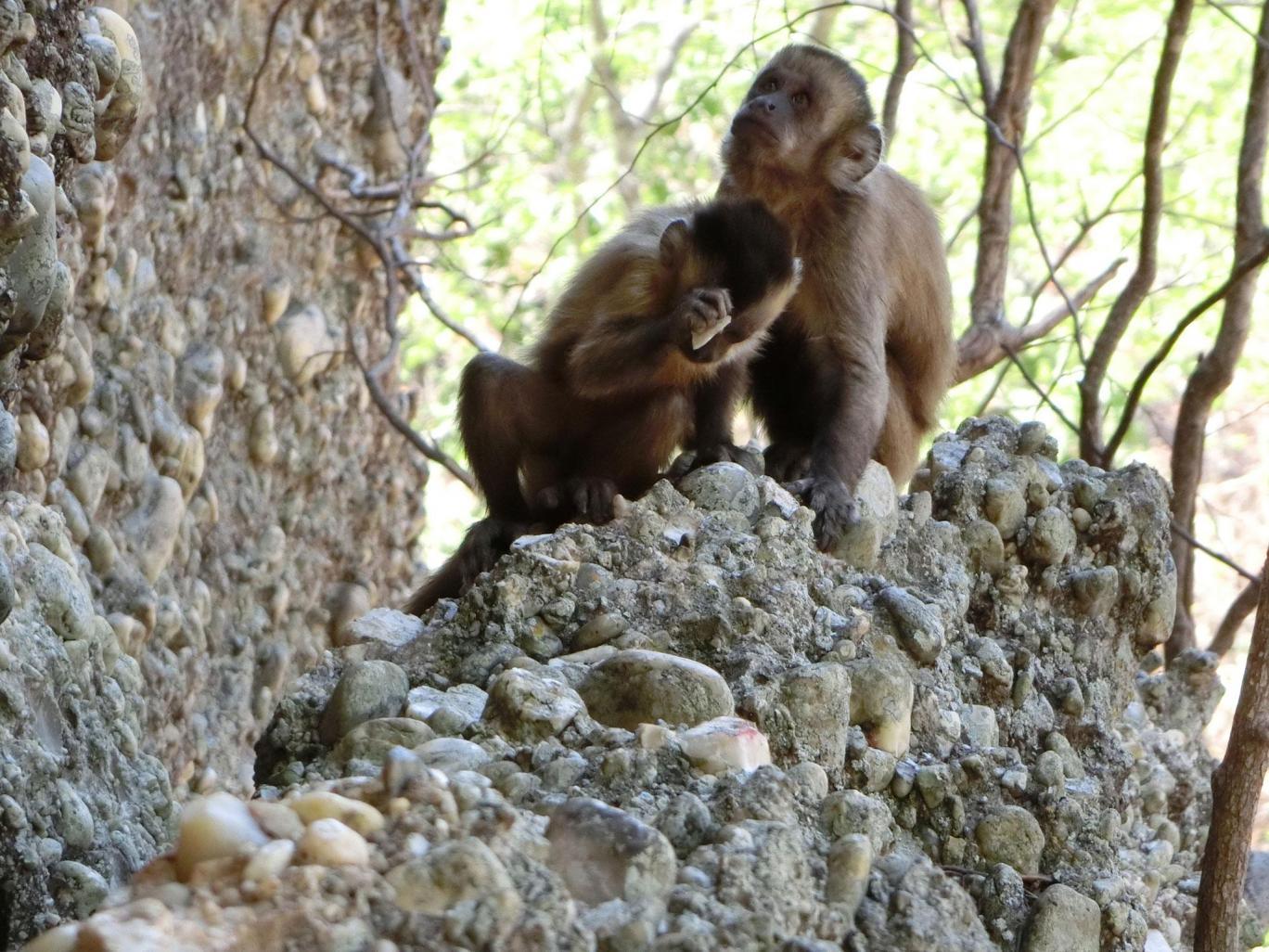 monkeystones.jpg