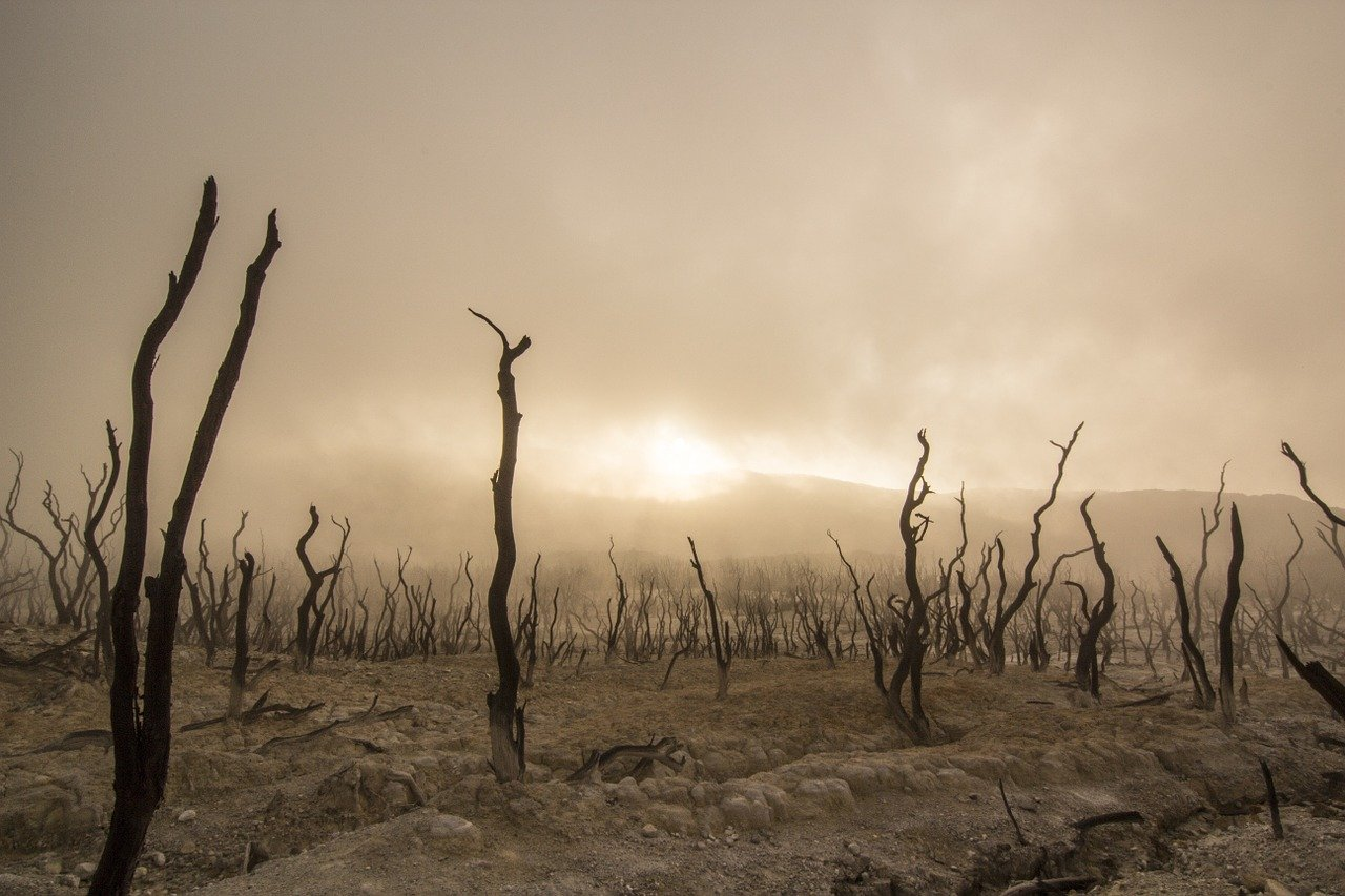 dead-trees-947331_1280.jpg