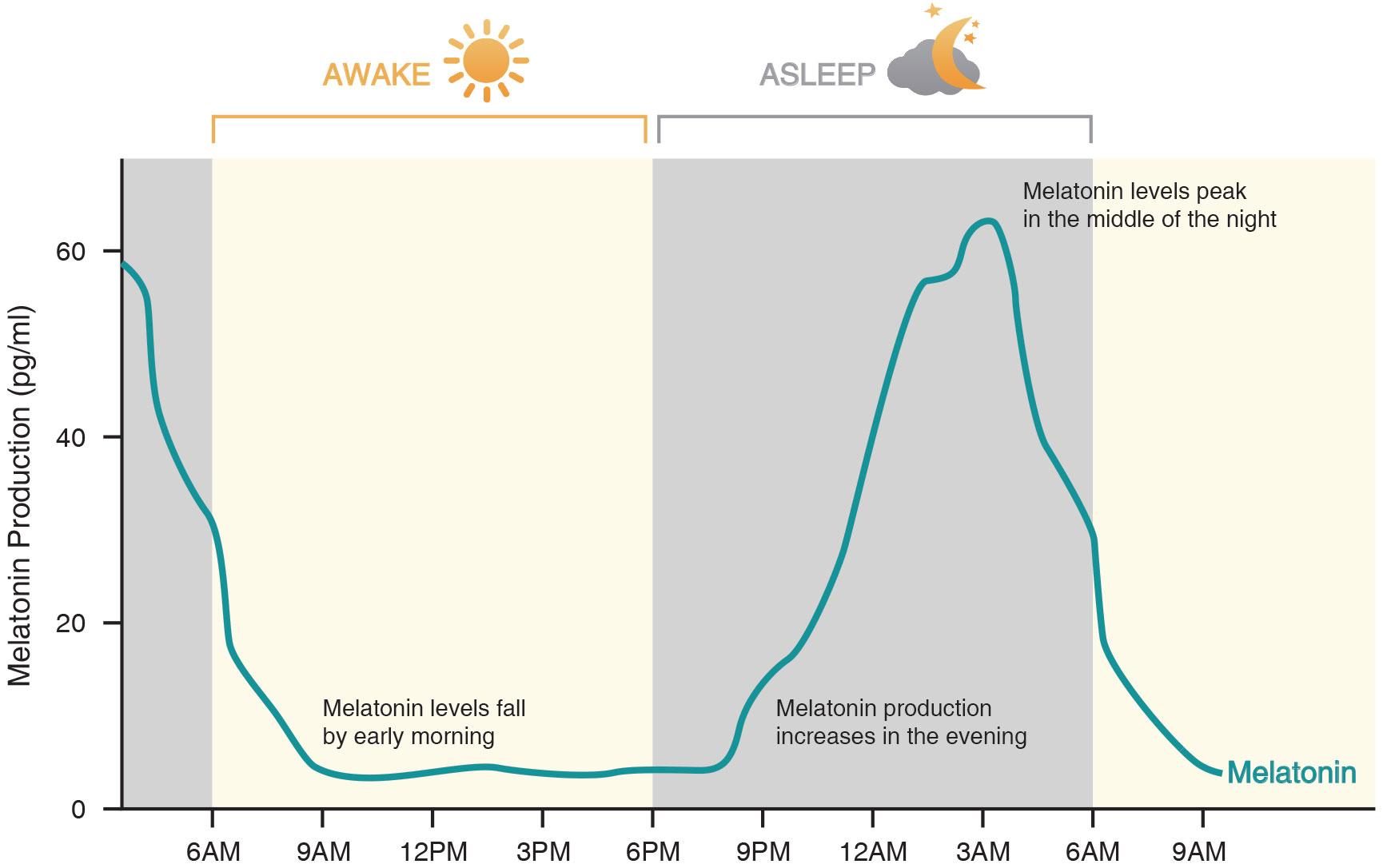 낮과 밤의 멜라토닌 분비량의 변화 그래프.jpg