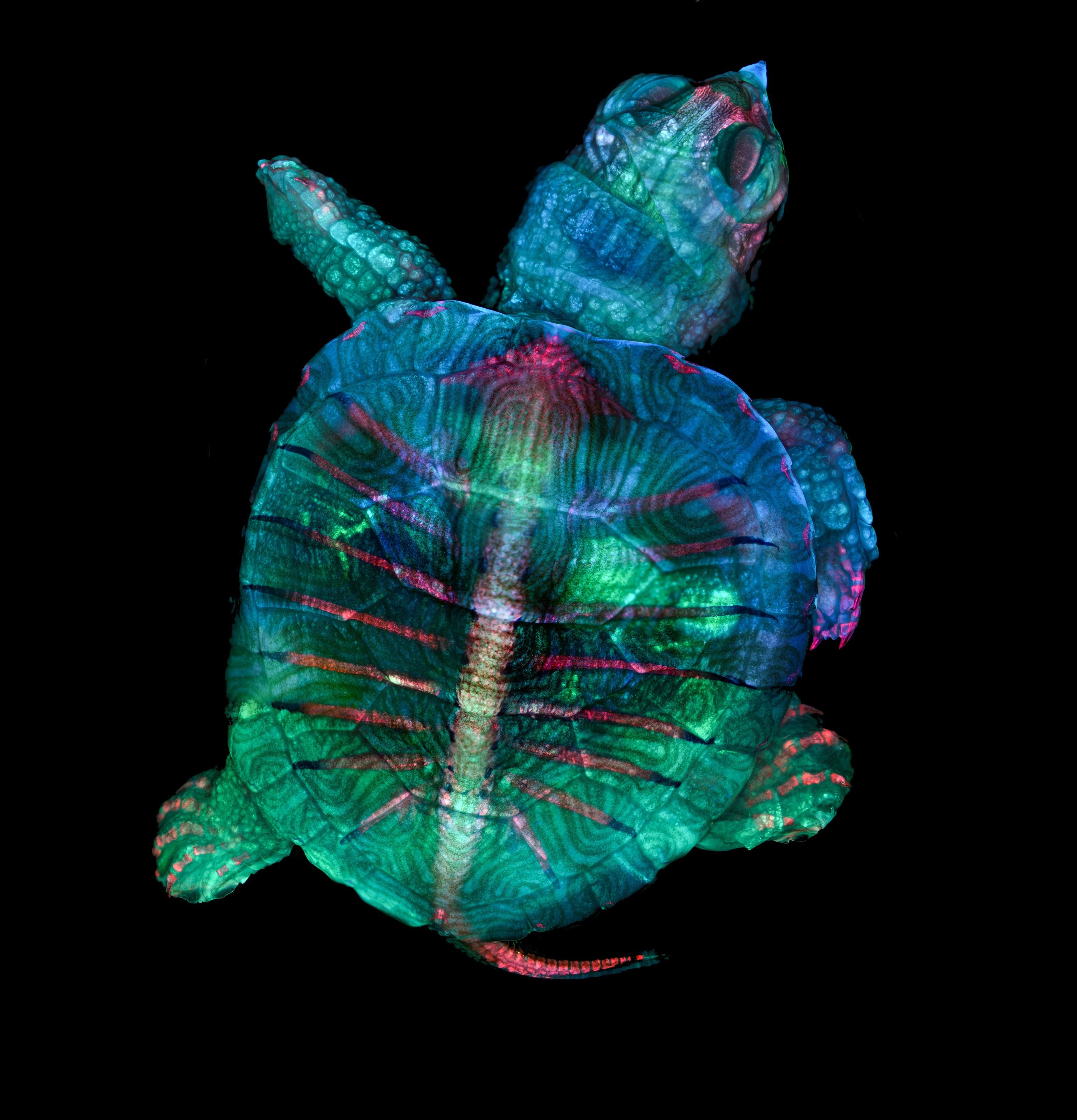 n1-Zgoda_Turtle.jpg