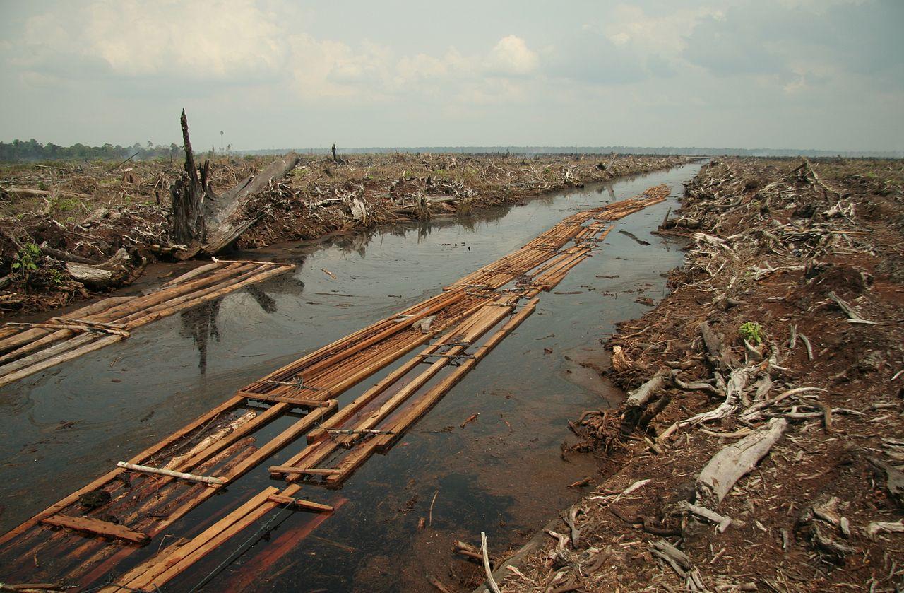 1280px-Riau_deforestation_2006.jpg