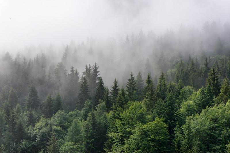 569-wilderness.jpg