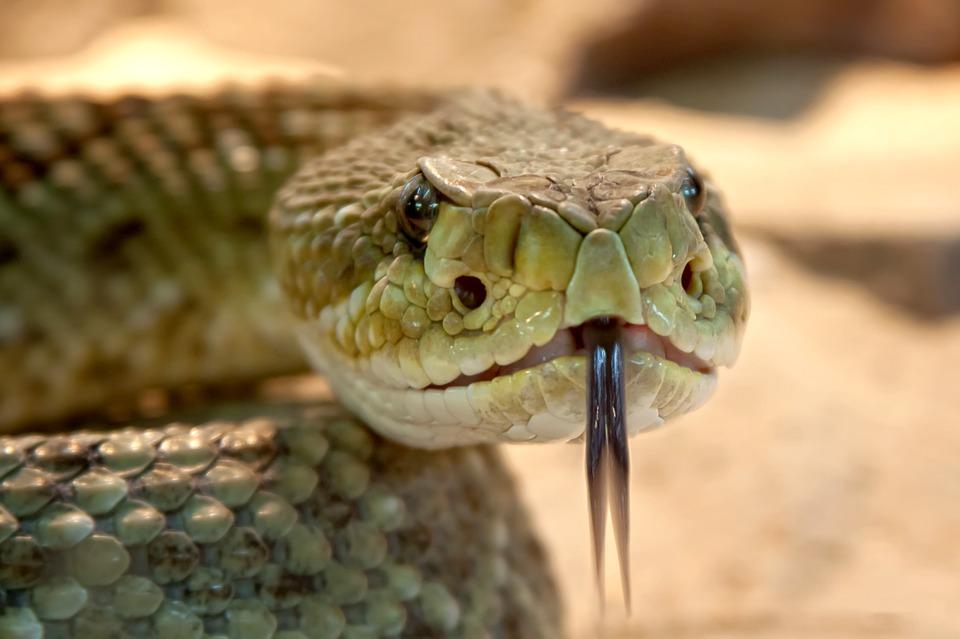 snake1.jpg