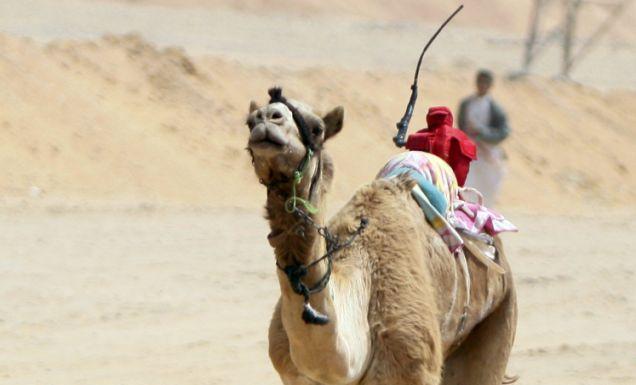 robot_jockey_camel.jpg