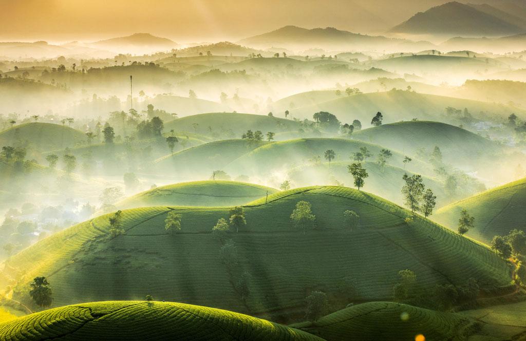 w2852---Tea-Hills-©-Vu-Trung-Huan.jpg