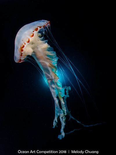 w12Compact-Wide-Angle_Melody-_Chuang-_dancing-jellyfish.jpg