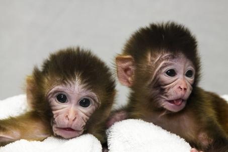 large_monkeys.jpg