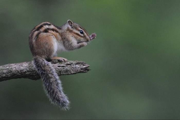 squirrel009.JPG