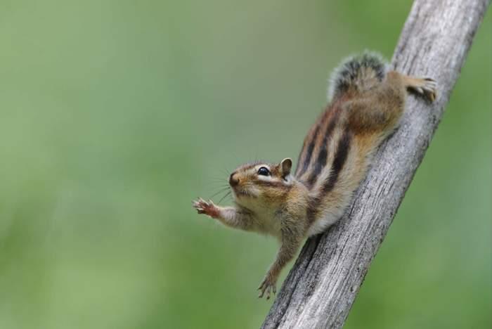 squirrel021.JPG