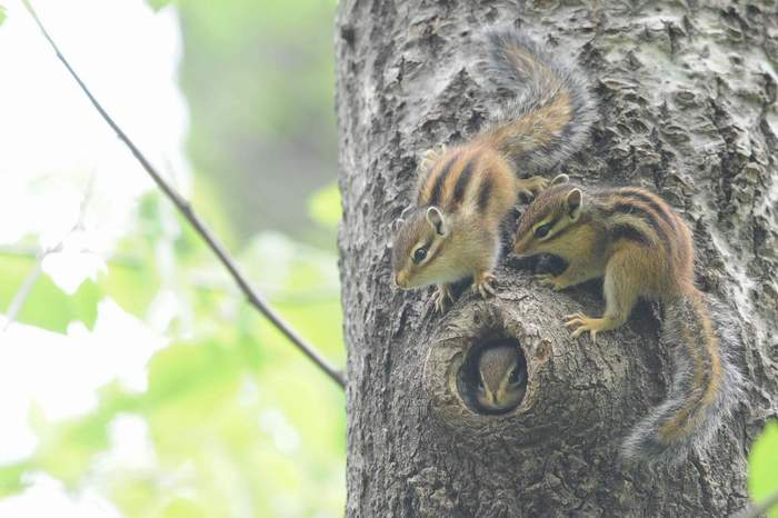 squirrel03.JPG