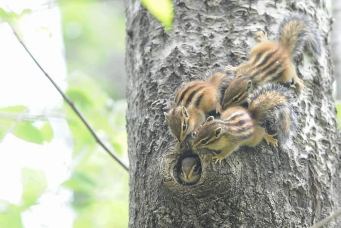 squirrel04.JPG