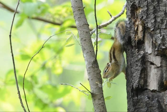 squirrel06.JPG