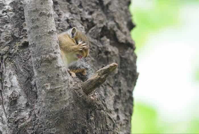 squirrel07.JPG