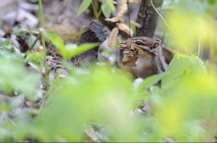 squirrel09.JPG