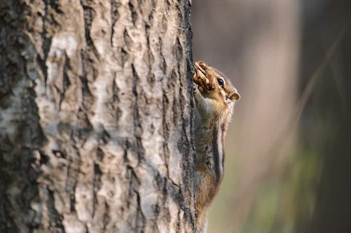 squirrel12.JPG
