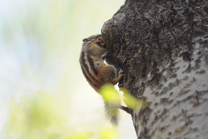squirrel13.JPG