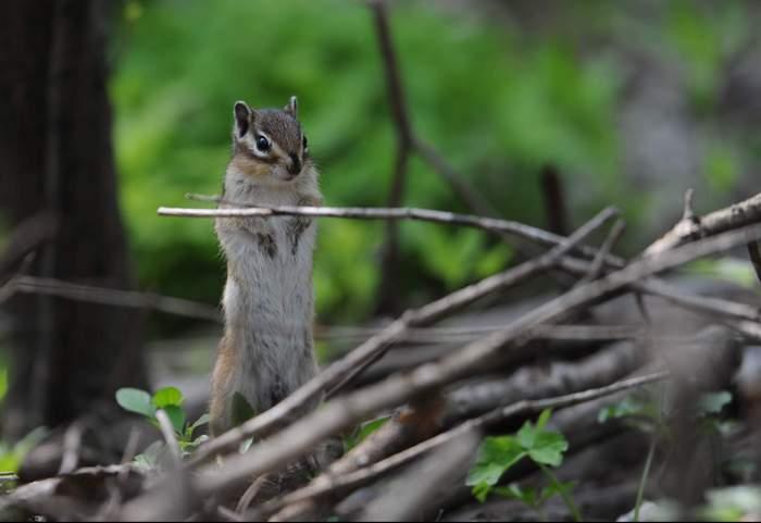 squirrel14.JPG