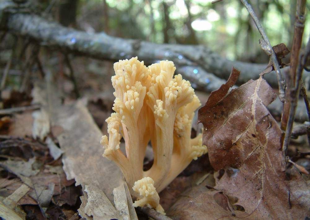 mushroom04.JPG