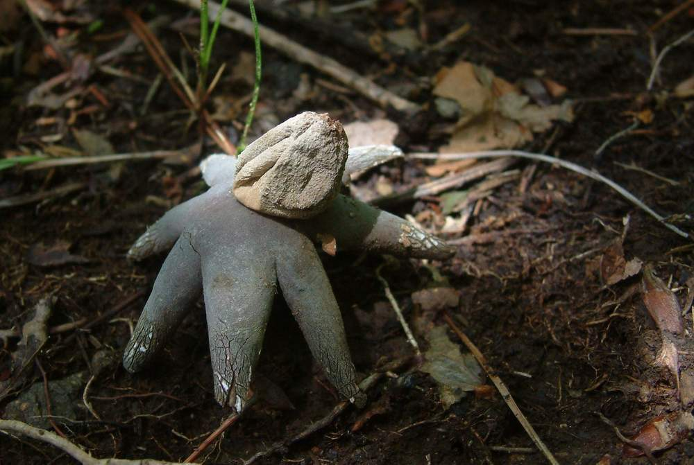 mushroom13.jpg