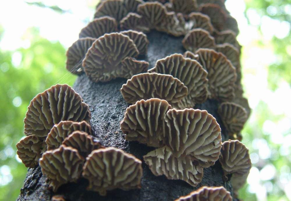 mushroom19.JPG