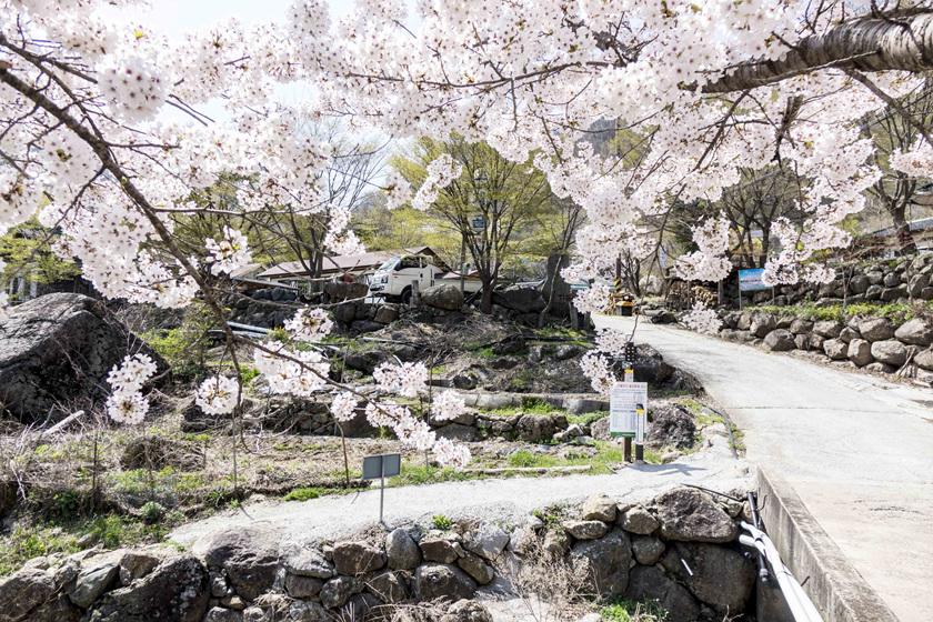 봄날의새재.jpg