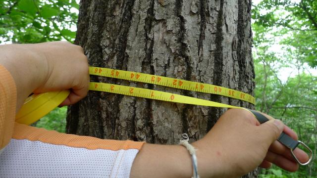 5번지주신갈나무2.JPG